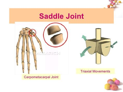 Topic 4 joint