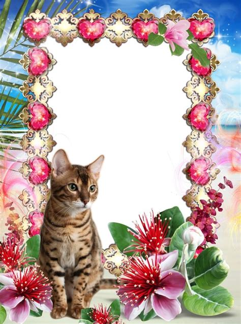 12 Cute Bears Photoshop Frame PNG Images - Valentine Day