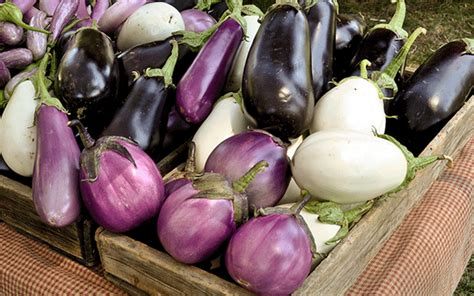 Advantages and disadvantages of eating eggplant - Featured