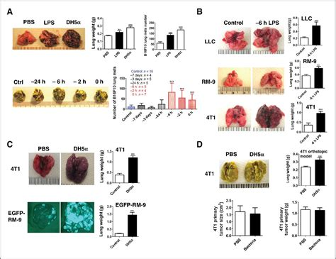 The Ubiquitin–CXCR4 Axis Plays an Important Role in Acute